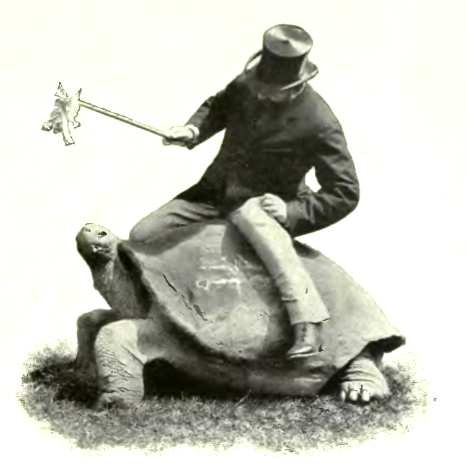 Rothschild on a tortoise